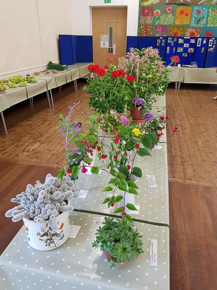 horticultural-show-2017-19