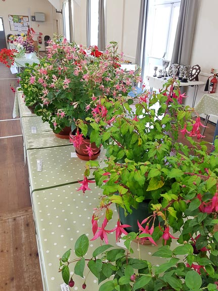 horticultural-show-2017-22