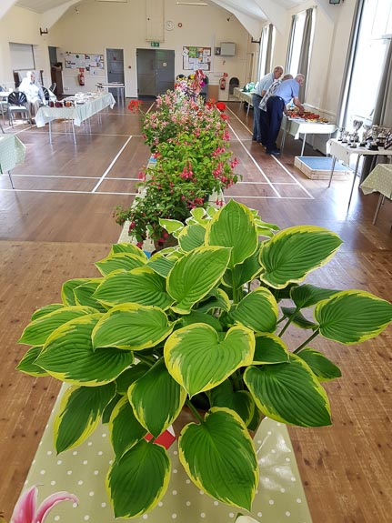 horticultural-show-2017-26