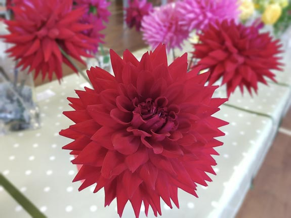 horticultural-show-2017-45