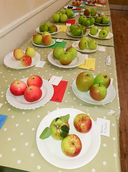 horticultural-show-2017-48