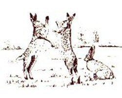 hartshall-lane-walk-hares
