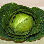 horticultural-show-cabbage