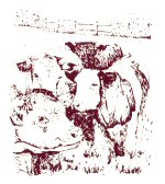 A line drawing of three cows viewed from the front