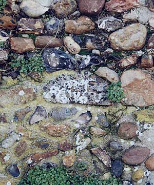 Photograph of part of a pudding-stone quern embedded in the wall of St. Mary's churchyard. It is of grey stone with inset pebbles ie: a conglomerate. It is well disguised because the wall itself is of flint and pebbles.