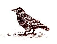 three-windmills-walk-crow