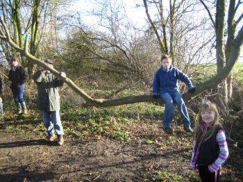 group of children climbing on trees during their guided walk in the woods