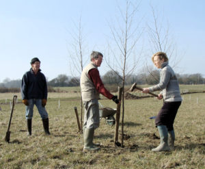 Planting Silver Birches