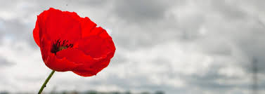 photograph of a stunning red poppy against a bright but grey cloudy sky