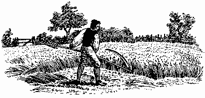 Black and white line drawing of farm labourer scything a field of standing corn. He is wearing along sleeved shirt under what appears to be a sleeveless jerkin, and his trousers are tucked into some sort of leggings. There are trees in the background alongside a hedge and a three barred gate.