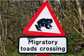 migratory toad road sign