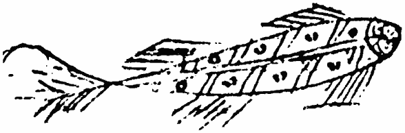 Stylised line drawing of a fish (a small one, minnow-like) which was part of the decoration on the 1537 will of John Robwood.