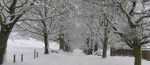 avenue if trees covered in snow