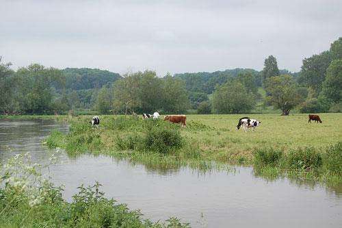 River Waveney at Bungay Common