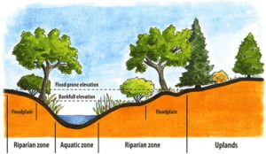 Colour graphic showing river banks, and river zones